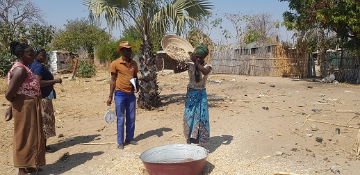 Woman farmer pours out millet
